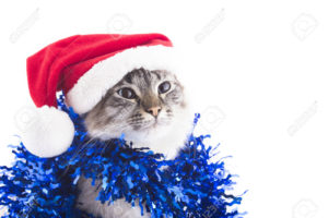 Cat with Santa Claus hat and tinsel isolated on white background. Blue eyes